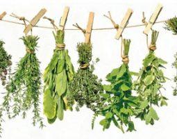Профилактика простатита травами и чаем