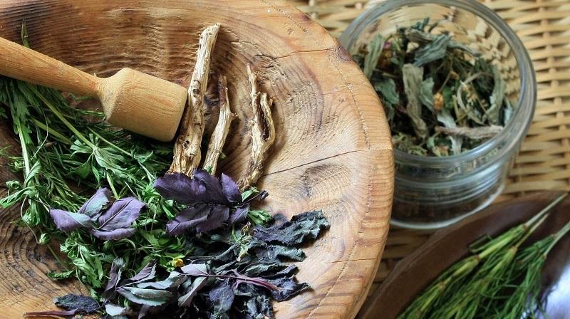 травы для профилактики простатита