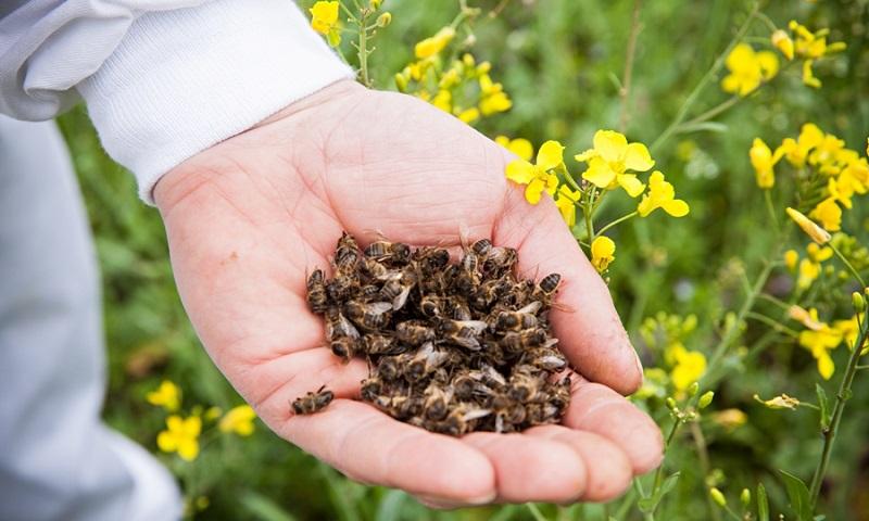 рецепт настойки из пчелиного подмора